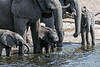 Elephant-family-drinking-from-Chobe-River-4