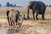 Baby-elephant-having-trouble-with-river-bank