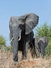 Elephants-on-the-way-to-Chobe-River-2