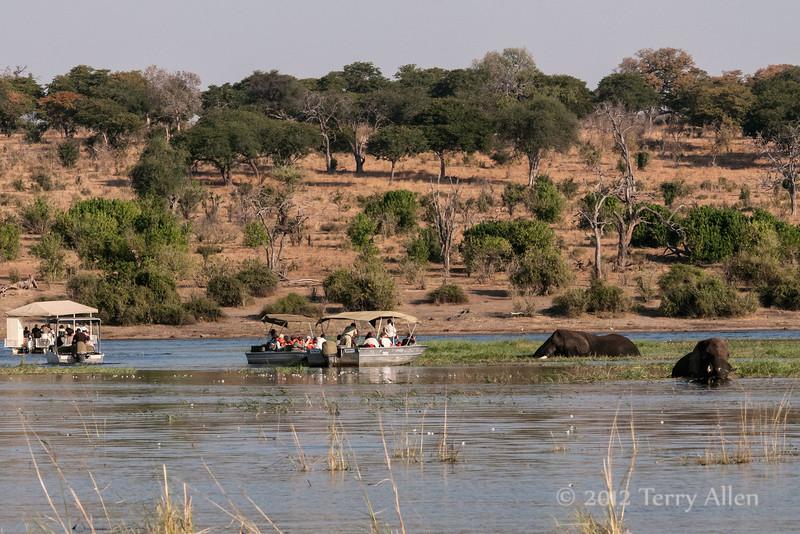 Elephant-watching-at-sunset,-Chobe-River