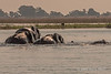 Elephants-crossing-Chobe-River-2