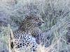 Leopard-watching-kill-2