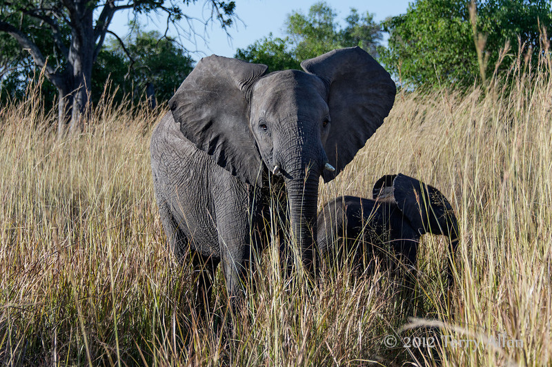 Mother-&-baby-elephant