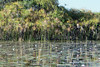 Okavango-water-lillies-&-grasses