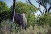 Aggressive-elephant-2