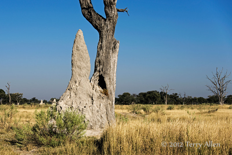 Termite-mounds