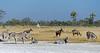 Okavango-salt-pan-2