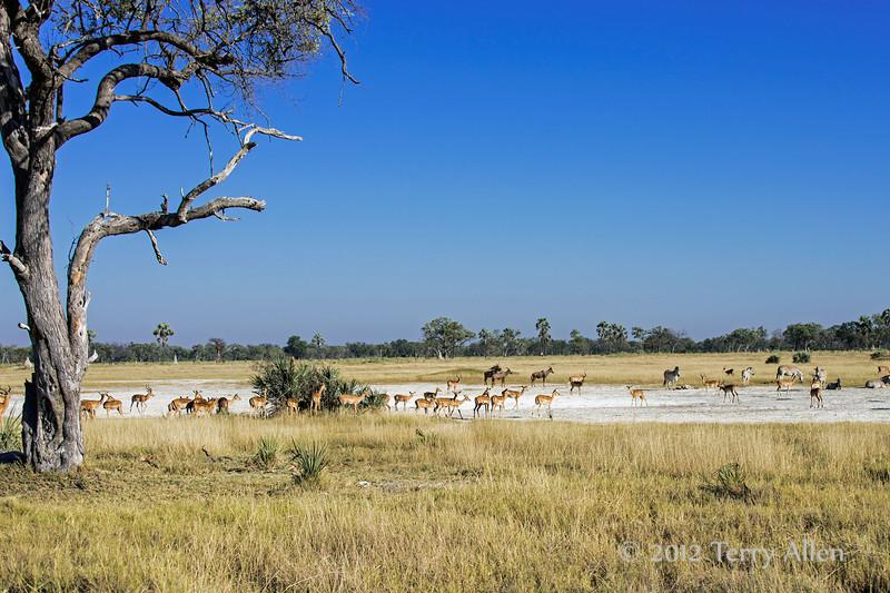 Okavango-salt-pan-1