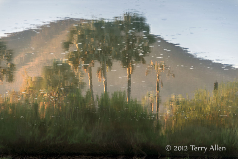 Palm-trees-and-mountain-reflected-in-Epupa-River,-Namibia