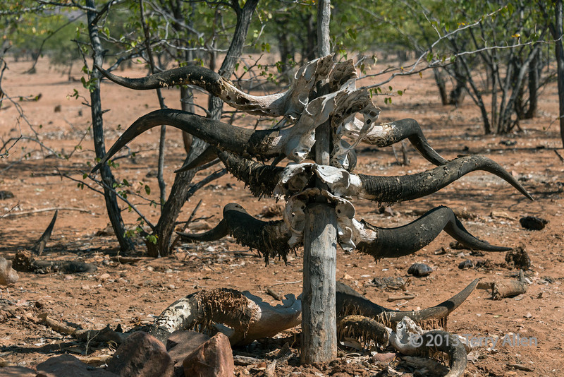 Himba-grave-with-cattle-horns,-Epupa,-Namibia<br /> <br /> The Himba dead are buried away from the village with slaughtered cattle horns marking the grave.  The horns point-up-for-a-man,-down-for-a-woman.  The more the horns, the more the wealth and status of the deceased