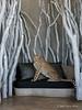 Cheetah-on-sofa-6