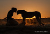 Woman-&-pet-cheetah-silhouetted-at-sunset-2