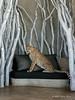 Cheetah-on-sofa-5