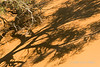 Sand-dune-with-(camelthorn)-tree-shadow