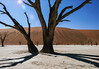 Deadvlei,-tree-&-shadow-with-lens-flare-3