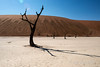 Deadvlei,-tree-&-shadow-with-lens-flare
