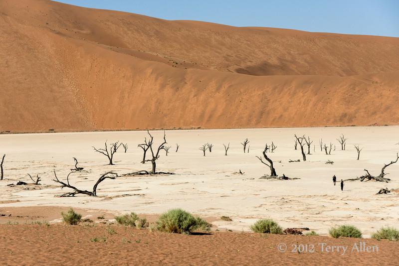Deadvlei-dried-lake-bed,-Sossusvlei