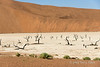 Deadvlei-dried-lake-bed,-Sossusvlei