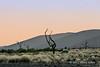 Sand-dune-at-sunrise-4,-Sussusvlei