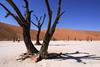 Deadvlei-trees,-Sussusvlei
