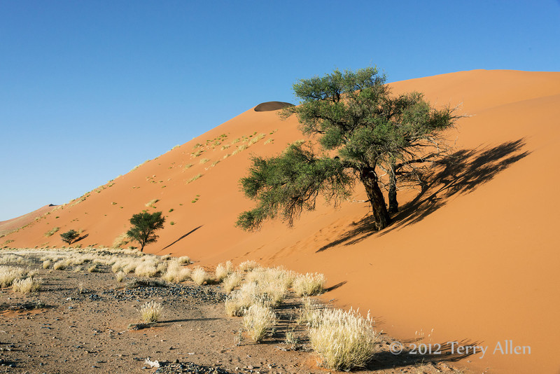 Sand-dune-with-trees-and-grasses