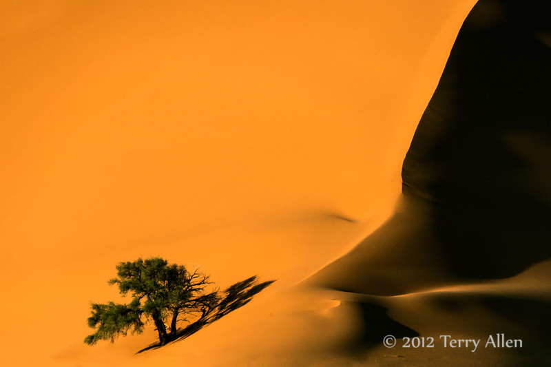 Sand-dune-and-camel-thorn-tree