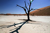 Deadvlei,-tree-&-shadow-with-lens-flare-2