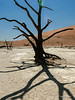 Deadvlei,-tree-&-shadow-with-lens-flare-4