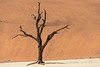 Deadvlei-tree-2