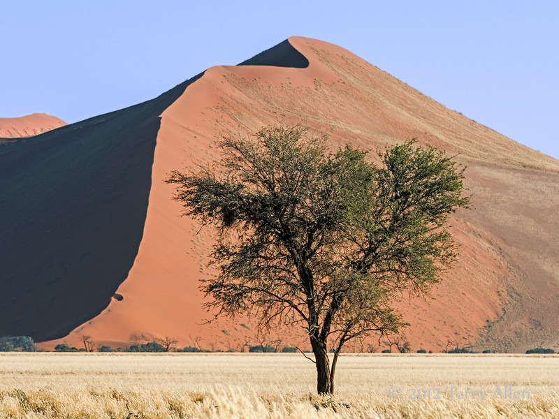 Sand-dune-and-camel-thorn-tree-2,-Sossusvlei