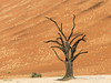 Deadvlei-tree-1