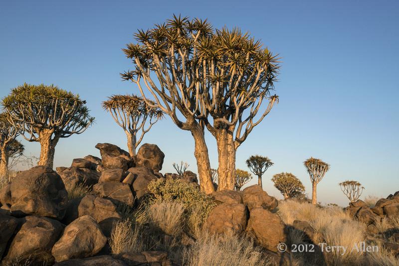 Quiver-trees-at-sunset-4,-Keetsmanhoop