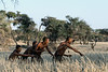 Bushmen-demonstrating-hunting-technique-5,-Intu-Africa