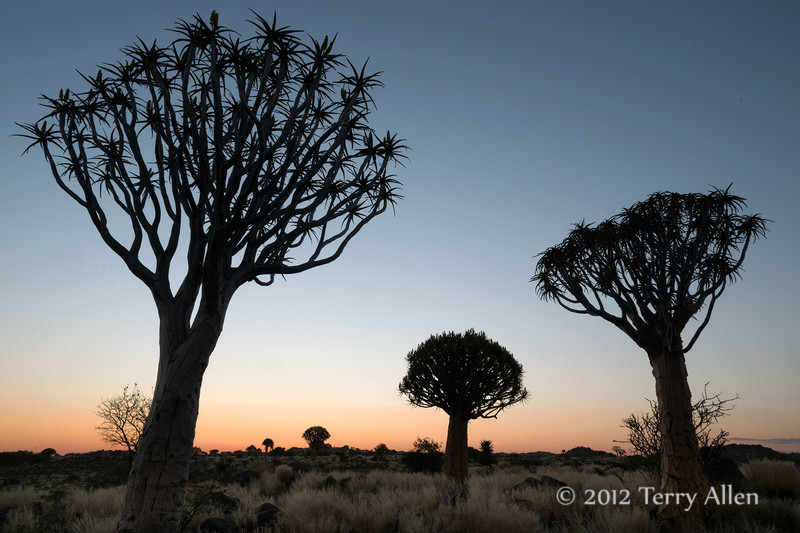 Quiver-trees-at-sunset-8,-Keetsmanhoop