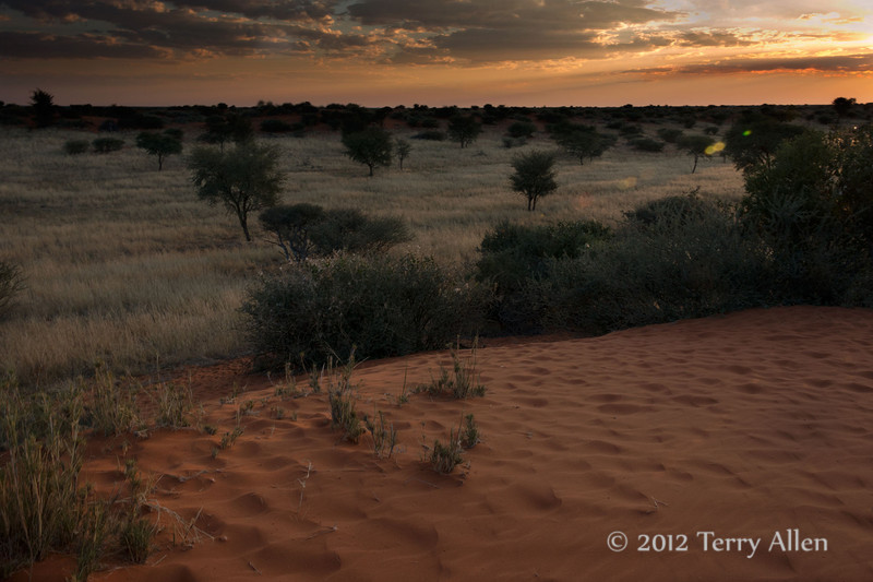 Bagatelle-dunes-at -sunset