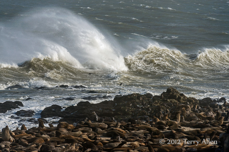 Fur-seal-colony,-stormy-day-2,-Cape-Cross-Namibia