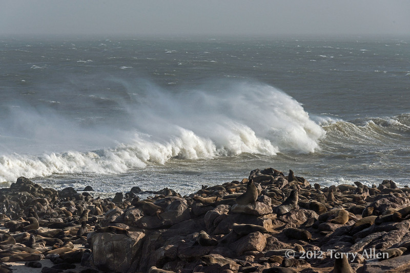 Fur-seal-colony,-stormy-day-3,-Cape-Cross-Namibia