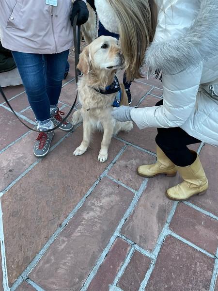 Katie Comfort Dog