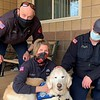 Moses Comfort Dog with Fire Station 7