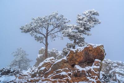 Frozen in the Mist