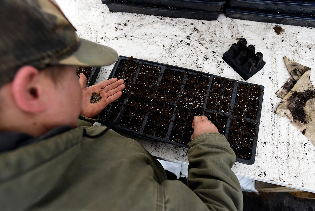 . Field Crew Manager Will Chandler plants vegetable seeds at the Cure Organic Farm on Monday in Boulder County. More photos: dailycamera.com Jeremy Papasso/ Staff Photographer 02/12/2018