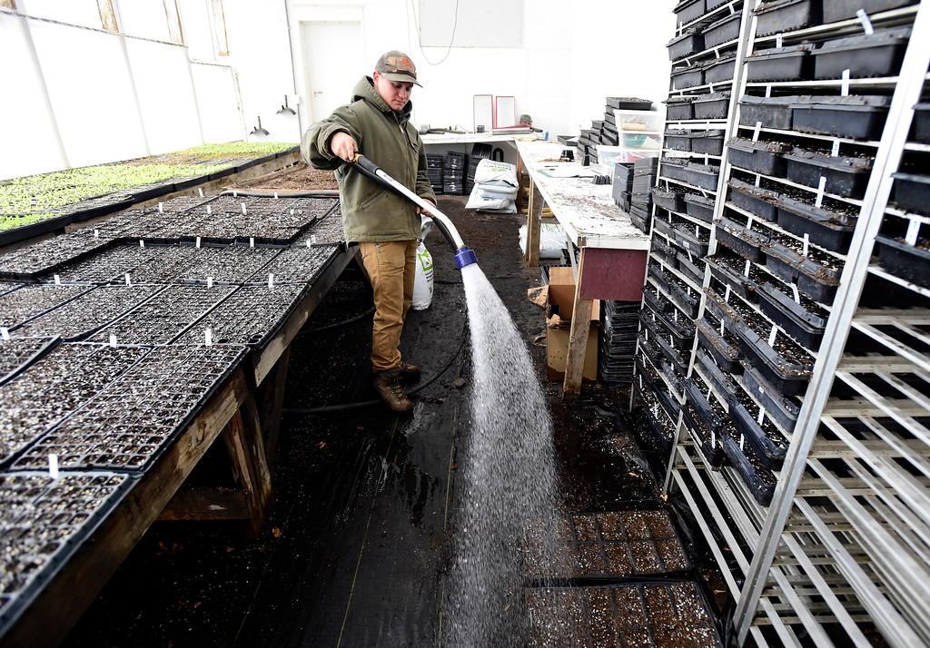 . Field Crew Manager Will Chandler waters freshly potted  vegetable seeds at the Cure Organic Farm on Monday in Boulder County. More photos: dailycamera.com Jeremy Papasso/ Staff Photographer 02/12/2018