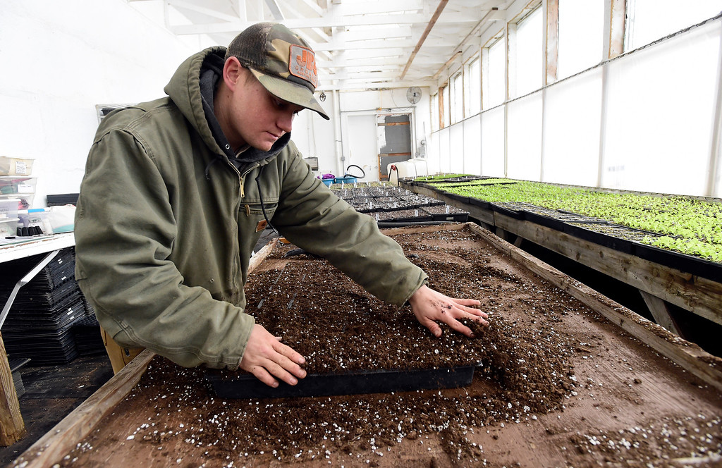 . Field Crew Manager Will Chandler works to plant vegetable seeds at the Cure Organic Farm on Monday in Boulder County. More photos: dailycamera.com Jeremy Papasso/ Staff Photographer 02/12/2018