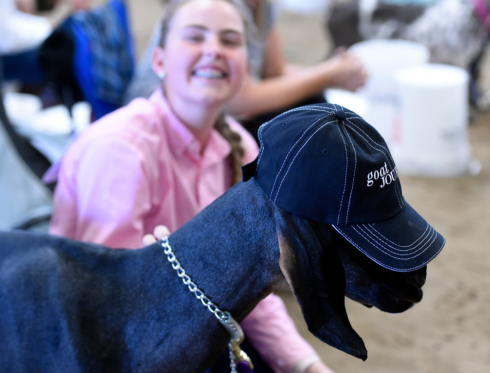 . LONGMONT, CO: August 9: (Photo by Cliff Grassmick/Staff Photographer).  Lily Thomas put a hat on her goat, Miss Alexa, during the Boulder County Fair in Longmont on August 9, 2018.