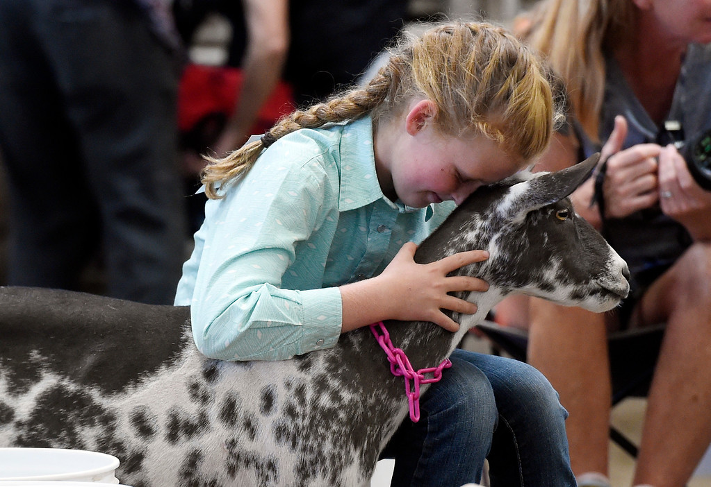 . LONGMONT, CO: August 9: (Photo by Cliff Grassmick/Staff Photographer). Anna Thomas hugs her goat after finishing the goat obstacle course during the Boulder County Fair in Longmont on August 9, 2018.