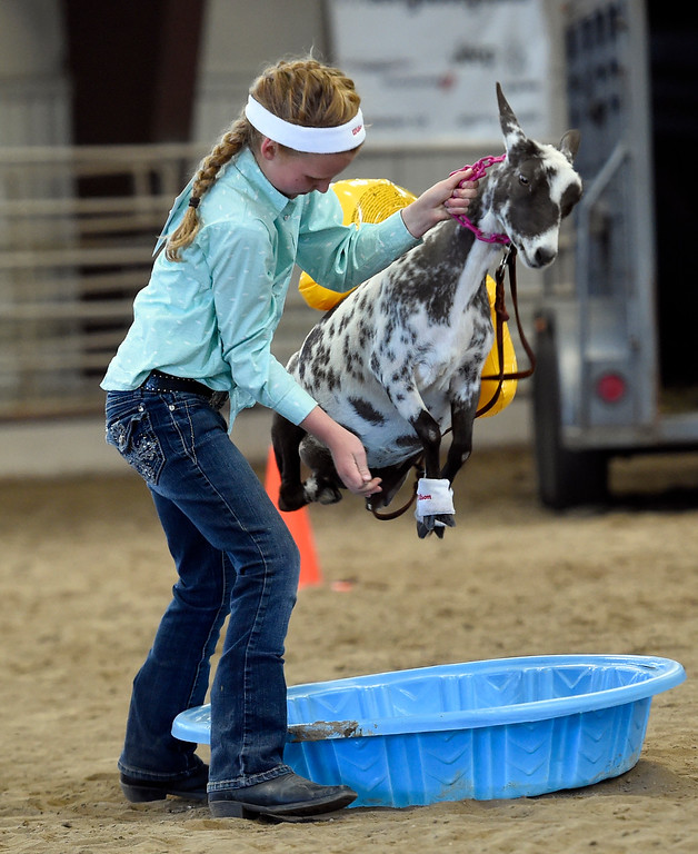 . LONGMONT, CO: August9: (Photo by Cliff Grassmick/Staff Photographer). Anna Thomas\' goat jumps over the pool instead of walking through during the goat obstacle course competition during the Boulder County Fair in Longmont on August 9, 2018.