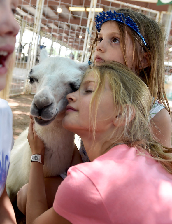 . Alayna Atherton, bottom, and her sister, Lucy, form a relationship with a llama in the petting zoo during the Boulder County Fair in Longmont on Tuesday, August 7, 2018. For more photos, go to dailycamera.com. Cliff Grassmick  Staff Photographer  August 7, 2018