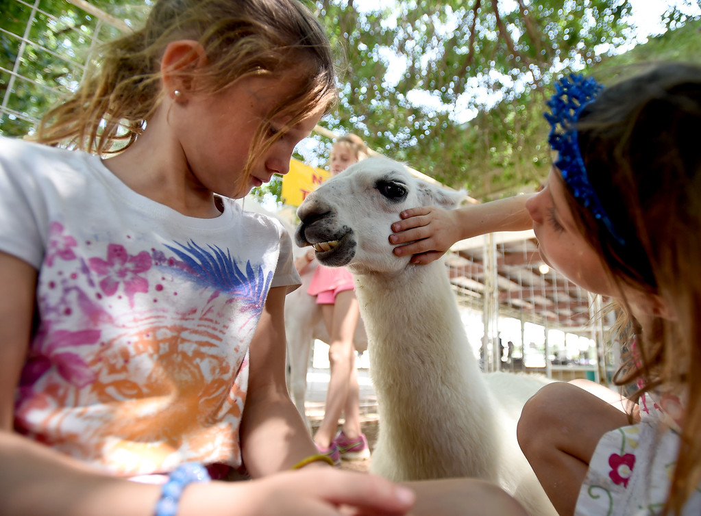 . Claire Atherton, left, and her sister, Lucy, form a relationship with a llama in the petting zoo during the Boulder County Fair in Longmont on Tuesday, August 7, 2018. For more photos, go to dailycamera.com. Cliff Grassmick  Staff Photographer  August 7, 2018
