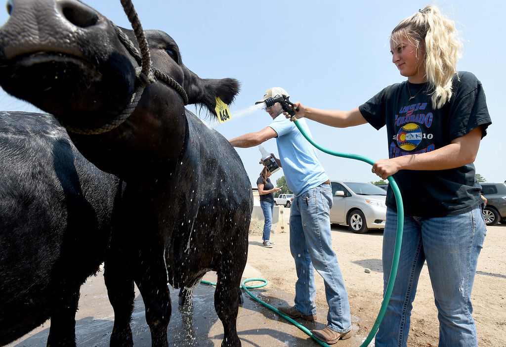 . Jetta Nannen, right, and her brother, Michael, wash down her cows during the Boulder County Fair in Longmont on Tuesday, August 7, 2018. For more photos, go to dailycamera.com. Cliff Grassmick  Staff Photographer  August 7, 2018