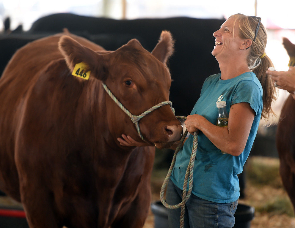 . Nickie Lafferty has a laugh with a cow during the Boulder County Fair in Longmont on Tuesday, August 7, 2018. For more photos, go to dailycamera.com. Cliff Grassmick  Staff Photographer  August 7, 2018